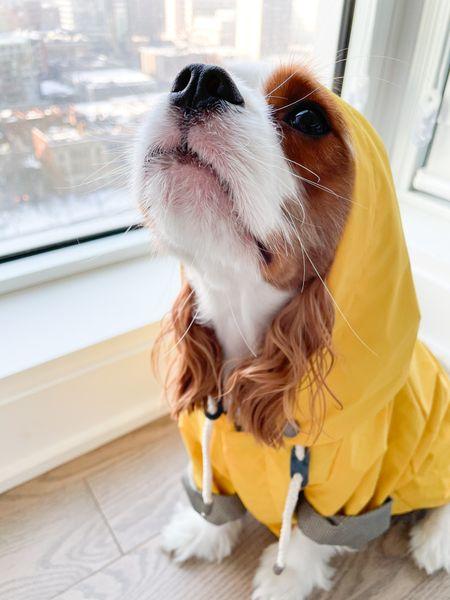 Maxbone Labor Day sale! Free bestselling raincoat with any purchase over 100$ use code BYESUMMER!   #LTKSeasonal #LTKsalealert #LTKfamily