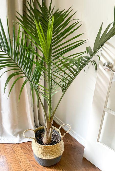 Purchase my seagrass basket!  #seagrassbasket #basket #neutralhome #plantmom #plants #plantlife #greebery #homeaccessories #homeaccents #homedetails #homedecor  #LTKunder50 #LTKhome #LTKstyletip