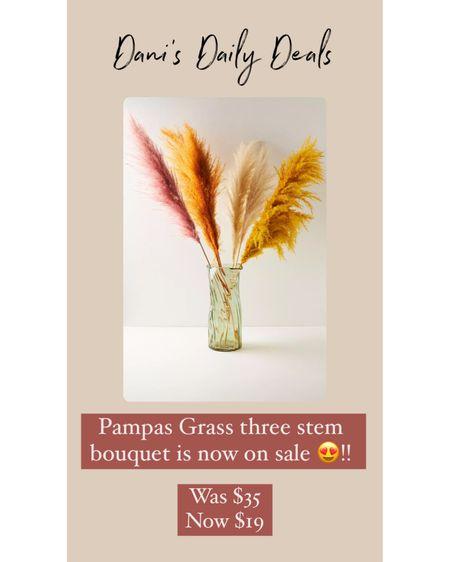 So many colors of pampas grass on sale! 😍💕   @liketoknow.it @liketoknow.it.europe @liketoknow.it.brasil @liketoknow.it.home @liketoknow.it.family    #liketkit #LTKbaby #LTKunder50 #LTKstyletip #pampasgrass #anthro    http://liketk.it/3hDd7
