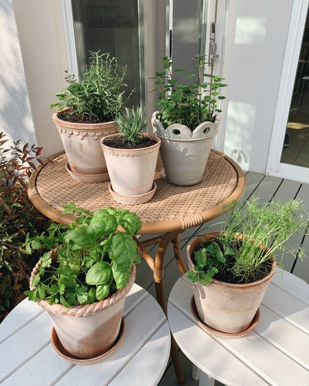 cannot contain my excitement!!! finally get to have a little herb garden of my own right in our backyard  still working on their permanent home but for now this will do! http://liketk.it/3c1RR @liketoknow.it #liketkit