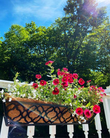 Window planter basket for back porch http://liketk.it/3gohZ #liketkit @liketoknow.it