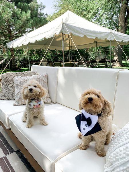 Dog wedding collars tux