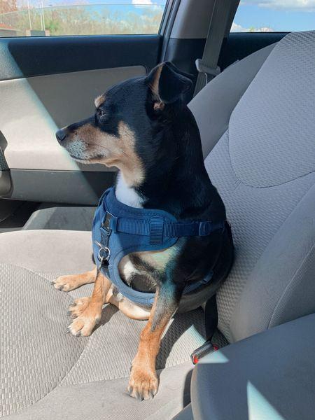 Dog harness Pet finds, pet accessories, travel. #liketkit @shop.ltk   #LTKtravel #LTKfamily