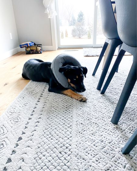 Finally, the tube of dignity. B was not a fan of the big plastic cone, but this inflatable tube he's doubling as a pillow and doing great! 😂🐕🙏🏽🤷🏼♀️   http://liketk.it/34125 #liketkit #LTKdog @liketoknow.it   You can instantly shop all of my looks by following me on the LIKEtoKNOW.it shopping app