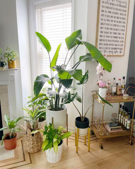 Loving this little jungle I'm building 🍃🌱🌿  Links via @ltk.home http://liketk.it/3j721 #liketkit @liketoknow.it