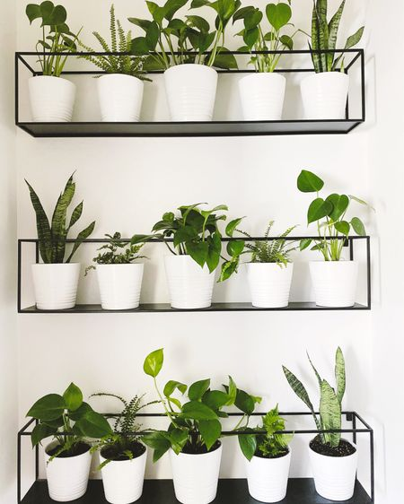 Modern Plant Wall Shelfie  . . . All sources linked on the @liketoknow.it app.  Follow me on the LIKEtoKNOW.it shopping app to get the product details for this space and others.  http://liketk.it/2U7BW   #liketkit