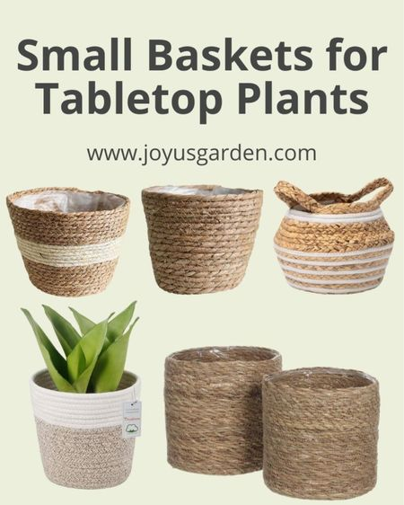 Using small baskets for houseplants is a cute and decorative way to display your small houseplants. These small woven baskets are perfect for 6 inch houseplants or small succulents. Houseplants, 6 inch houseplant, small basket, tabletop basket, tabletop houseplant, decorative baskets  #LTKhome #LTKstyletip #LTKunder50