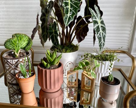 A collection of my favorite planter pots of all sizes!  #LTKunder50 #StayHomeWithLTK #LTKhome