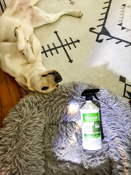 Pet-friendly rugs and pest spray FTW! Oh and machine-washable pet beds help too!   #LTKsalealert #LTKfamily #LTKhome