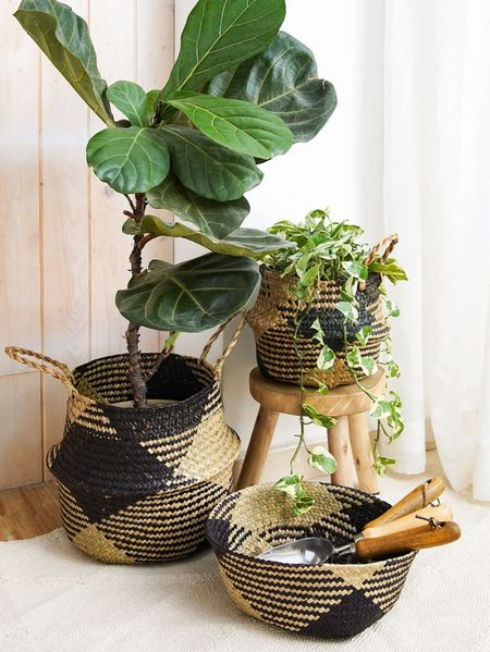Love these baskets & planters!   So humbled & thankful to have you here.. Shop the best selling & best rated items at the @nordstrom anniversary early access sale today! #nsale  CEO: patesillc.com & PATESIfoundation.org  @secretsofyve : where beautiful meets practical, comfy meets style, affordable meets glam with a splash of splurge every now and then. I do LOVE a good sale and combining codes!  Gift cards make great gifts.  @liketoknow.it #liketkit #LTKDaySale #LTKDay #LTKsummer #LKTsalealert #LTKSpring #LTKswim #LTKsummer #LTKworkwear #LTKbump #LTKbaby #LKTsalealert #LTKitbag #LTKbeauty #LTKfamily #LTKbrasil #LTKcurves #LTKeurope #LTKfit #LTKkids #LTKmens #LTKshoecrush #LTKstyletip #LTKtravel #LTKworkwear #LTKunder100 #LTKunder50 #LTKwedding #StayHomeWithLTK gifts for mom Dress shirt gifts she will love cozy gifts spa day gifts Summer Outfits Nordstrom Anniversary Sale Old Navy Looks Walmart Finds Target Finds Shein Haul Wedding Guest Dresses Plus Size Fashion Maternity Dresses Summer Dress Summer Trends Beach Vacation Living Room Decor Bathroom Decor Bedroom Decor Nursery Decor Kitchen Decor Home Decor Cocktail Dresses Maxi Dresses Sunglasses Swimsuits Rompers Sandals Bedding & Bath Patio Furniture Coffee Table Bar Stools Area Rugs Wall Art Nordstrom sale #Springhats  #makeup  Swimwear #whitediamondrings Black dress wedding dresses  #weddingoutfits  #designerlookalikes  #sales  #Amazonsales  #hairstyling #amazon #amazonfashion #amazonfashionfinds #amazonfinds #targetsales  #TargetFashion #affordablefashion  #fashion #fashiontrends #summershorts  #summerdresses  #kidsfashion #workoutoutfits  #gymwear #sportswear #homeorganization #homedecor #overstockfinds #boots #Patio Romper #baby #kitchenfinds #eclecticstyle Office decor Office essentials Graduation gift Patio furniture  Swimsuitssandals Wedding guest dresses Target style SheIn Old Navy Asos Swim Beach vacation  Beach bag Outdoor patio Summer dress White dress Hospital bag Maternity Home decor Nursery Kitchen 