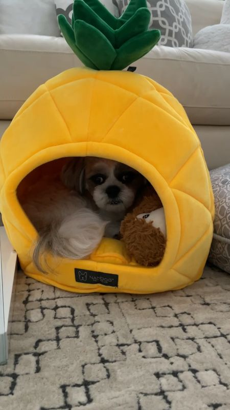 Found this cute @nandogpetgear pineapple dog bed  @homegoods for $19.99. Linked to the exact one for reference. Ralphie loves to curl up so he fits inside even though he's a 15 pound male Shih Tzu.    @liketoknow.it http://liketk.it/3ftcz #liketkit #LTKunder50 #LTKfamily #LTKkids