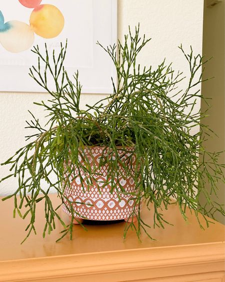 I love how my Mistletoe Cactus looks in this decorative terra cotta pot with white accents. Terra cotta plant pot, terra cotta and white pot, patterned terra cotta pot, houseplant pot, houseplant container, indoor plant pot, indoor plant container    #LTKhome #LTKstyletip #LTKunder50