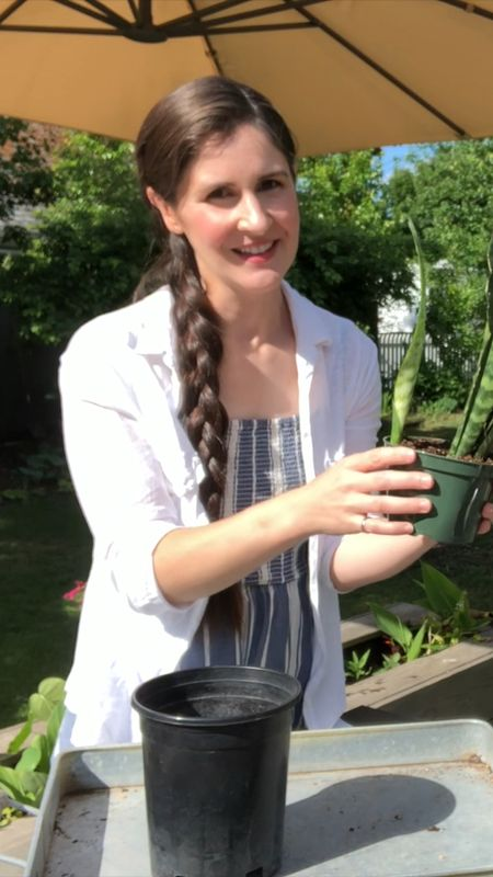 Re-potting snake plant 🪴 (full length tutorial on YouTube and IGTV) #houseplants  #LTKhome #LTKSeasonal