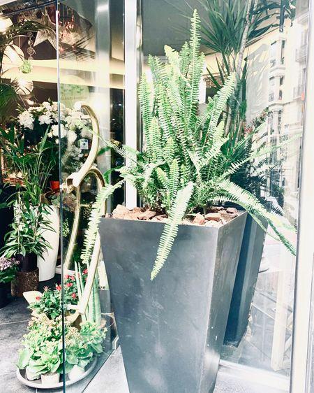 http://liketk.it/3dygV #liketkit @liketoknow.it @liketoknow.it.home #LTKhome   Cycas artificial plant  Black outdoor planters  Home Depot