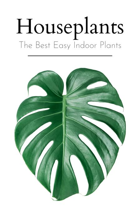 Houseplants make the room come alive 🥰 Here are the best houseplants for beginner indoor plant parents 🙌 these easy tropicals and decor houseplants are easy to maintain and look great 👍   #LTKhome