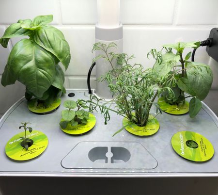 AeroGarden makes some of the best indoor smart gardens available! AeroGardens are so worth the cost in terms of easy indoor gardening. They work best when growing herbs and salad greens (although I've had success with fruiting plants too!) #garden #gardening #aerogarden #indoorgardening #plants  #LTKSeasonal #LTKhome