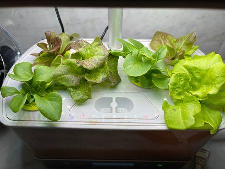 Gardening, indoor garden, hydroponics, herbs, herb kit, lettuces, garden supply, aerogarden, fresh herbs, fresh lettuce, garden,  #LTKsalealert #LTKSeasonal #LTKfamily