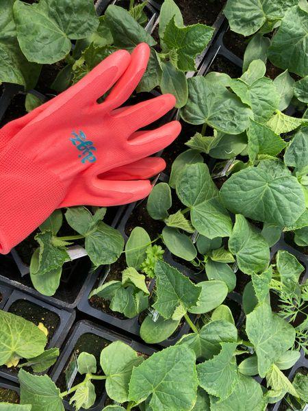 Vegetable garden seedlings at the garden center 🥕👍❤️ spring = vegetable garden heaven 🥬🙌 #vegetablegarden   #LTKSeasonal #LTKhome