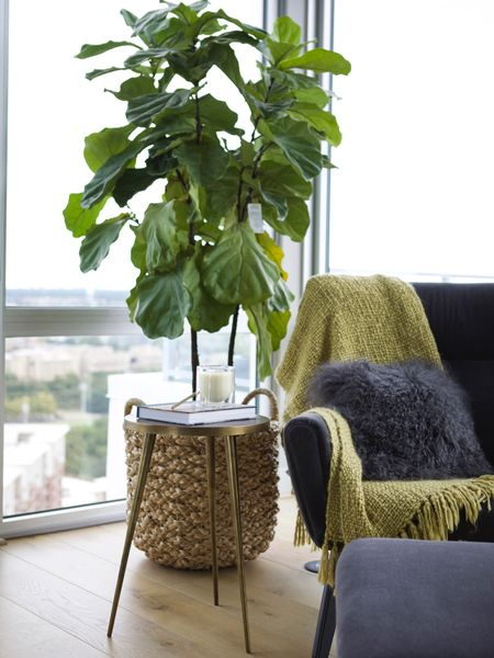 Cozy corner- perfect for reading a book or working from home. #bedroomsearing #accentchair #modernhome #wfh #fiddleleaf #fauxplants #baskets #blanket #relaxing #figtree #StayHomeWithLTK #LTKfamily #LTKhome @liketoknow.it.family @liketoknow.it.home http://liketk.it/2NmdV #liketkit @liketoknow.it