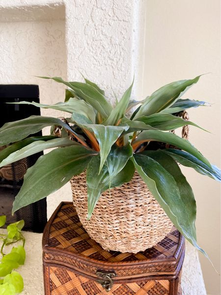 I love the look of plants in baskets. This one from H&M is the perfect shape and size for most houseplants. Plant baskets, baskets for plants, houseplant baskets, houseplant containers, houseplant decor  #LTKstyletip #LTKunder50 #LTKhome
