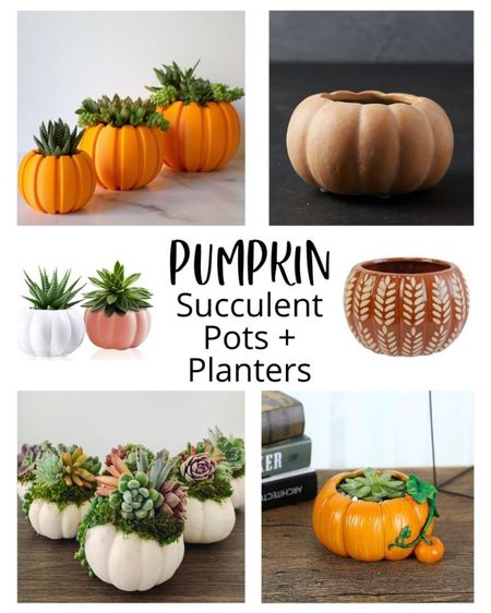 These pumpkin houseplant containers will put you in the pumpkin spice spirit! 🎃 I love how succulents look planted in a pumpkin shaped pot. Festive fall decor, fall house decor, Halloween decor, houseplant pots, succulent pots, fall houseplant pots  #LTKSeasonal #LTKhome #LTKstyletip