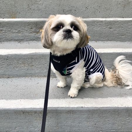 You can find and follow me @hi.ralphie on Instagram.  Ralphie took this onsie and the Puppia harness in size M. He is a 15 pound male shih tzu.  10.5 neck 16.5 chest. I have washed the onesie before and the hole I cut for his private area allows him to do his business comfortably and it has not frayed. I wash and line dry the onesie.    @liketoknow.it http://liketk.it/2UTX1 #liketkit #LTKstyletip #LTKunder50 #LTKfamily