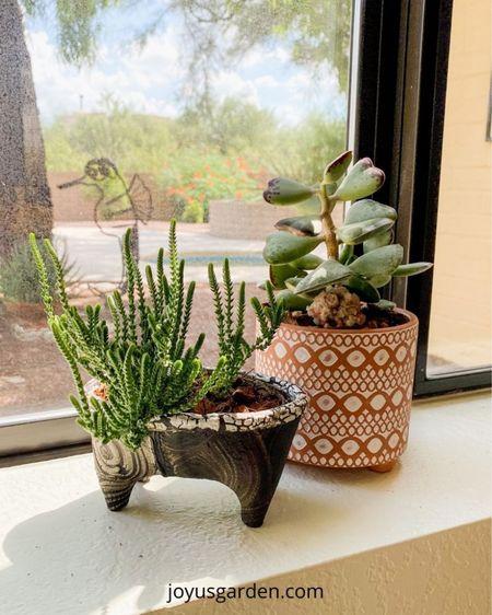 I LOVE how my succulents look in these little pots ❤️ succulent pot, succulent planter, small plant pot, small plant container, bathtub pot, claw foot plant pot, unique plant pots.   #LTKstyletip #LTKhome