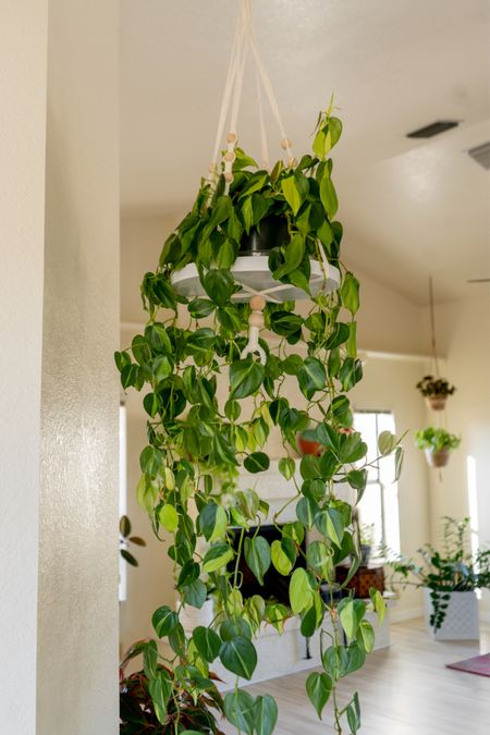 """This hanging houseplant planter came with a brown tray & I spraypainted it white. The wooden beads add a little somethin' somethin'. I love that it has a tray because it holds a 6"""" hanging plant beautifully. My Philodendron Brasil is touching the floor - time for a little pruning!   #LTKhome"""