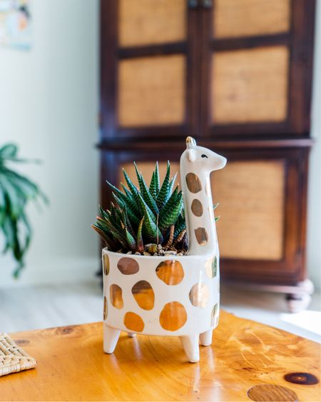 I love this adorable giraffe pot for small succulents. It's perfect for animal lovers who want to display their plants in a fun yet elegant way. Be careful not to over water your succulents though because this cute pot doesn't have a drain hole.    #LTKhome #LTKstyletip #LTKSeasonal
