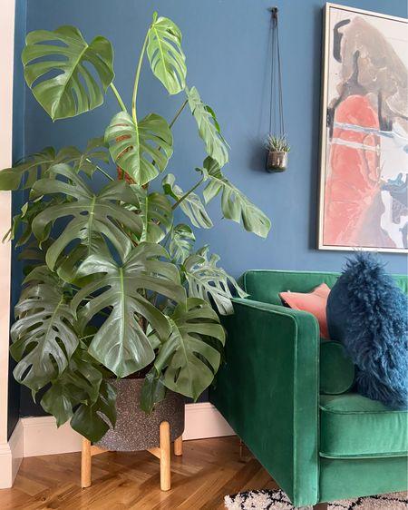 @liketoknow.it.family @liketoknow.it.home @liketoknow.it.europe #liketkit #LTKhome #LTKunder100 #LTKfamily @liketoknow.it http://liketk.it/2Q1OW terrazzo plant pot, plant pot, plant stand, planters, plant styling ideas, terrazzo planter