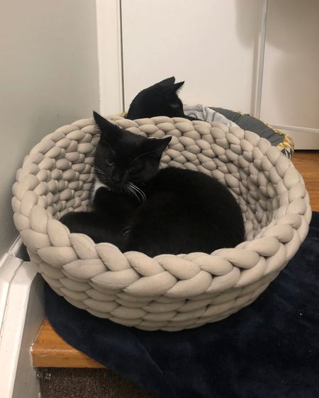 Our cute lil Frankie in his adorable braided cat bed - we call it his kitty bowl lol http://liketk.it/3jwkv #liketkit @liketoknow.it #LTKfamily #LTKhome #LTKstyletip @liketoknow.it.home #LTKpets